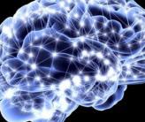 ¿Qué factores aumentan la neuroplasticidad?
